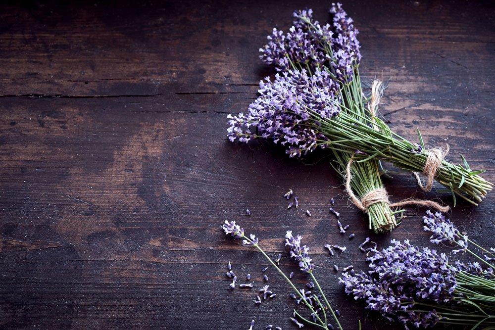 Ameisen bekämpfen mit Lavendel