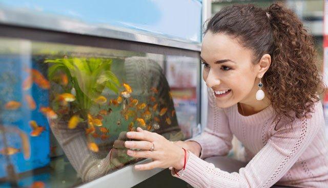 Algen Aquarium entfernen