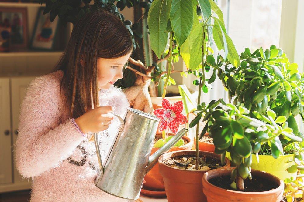 Mädchen gießt Avocadopflanze