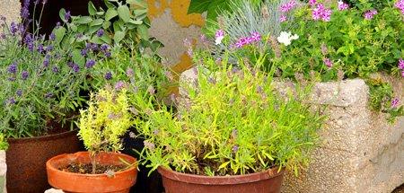 58 Tipps für den Umgang mit Pflanzen 1