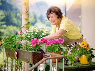 Balkon Zimmerpflanzen Tipps
