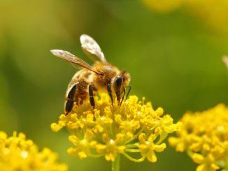 Bienenstich Hilfe Tipps