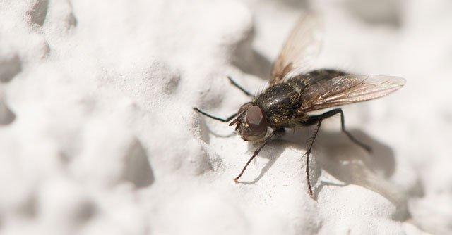 Fliegendreck entfernen