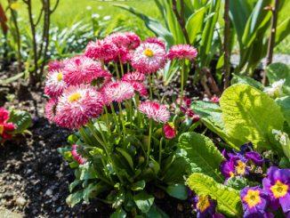 Frühlingsbeet im Ziergarten