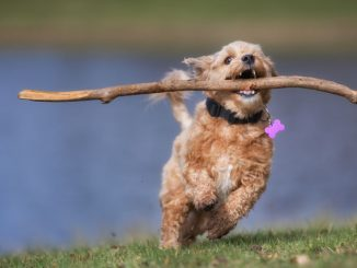 Hund Bewegung