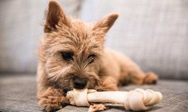 Hund Knochen Belohnung