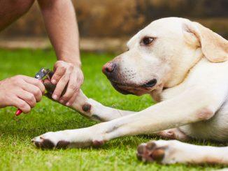 Hund Krallen schneiden