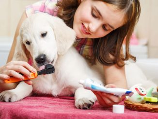 Hund Zahnpflege