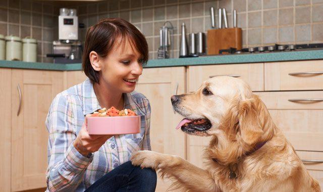 Hundefutter Tipps