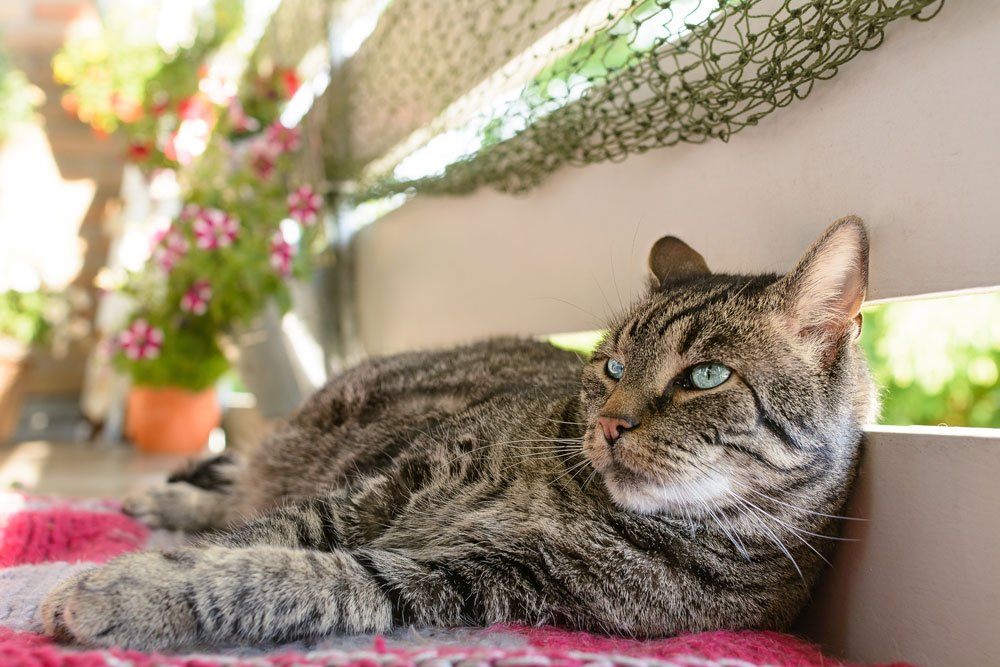 Katze Balkon sicher