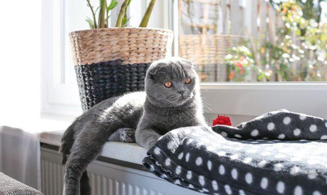 Katze Fenster