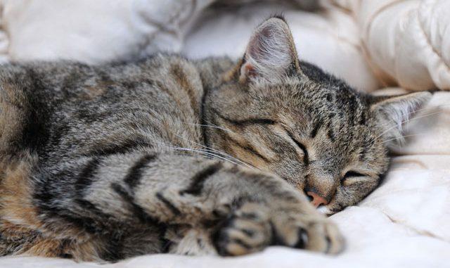 Katze Schlafplatz