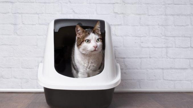 Katzenklo reinigen