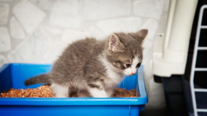 Katzenstreu Wohnung