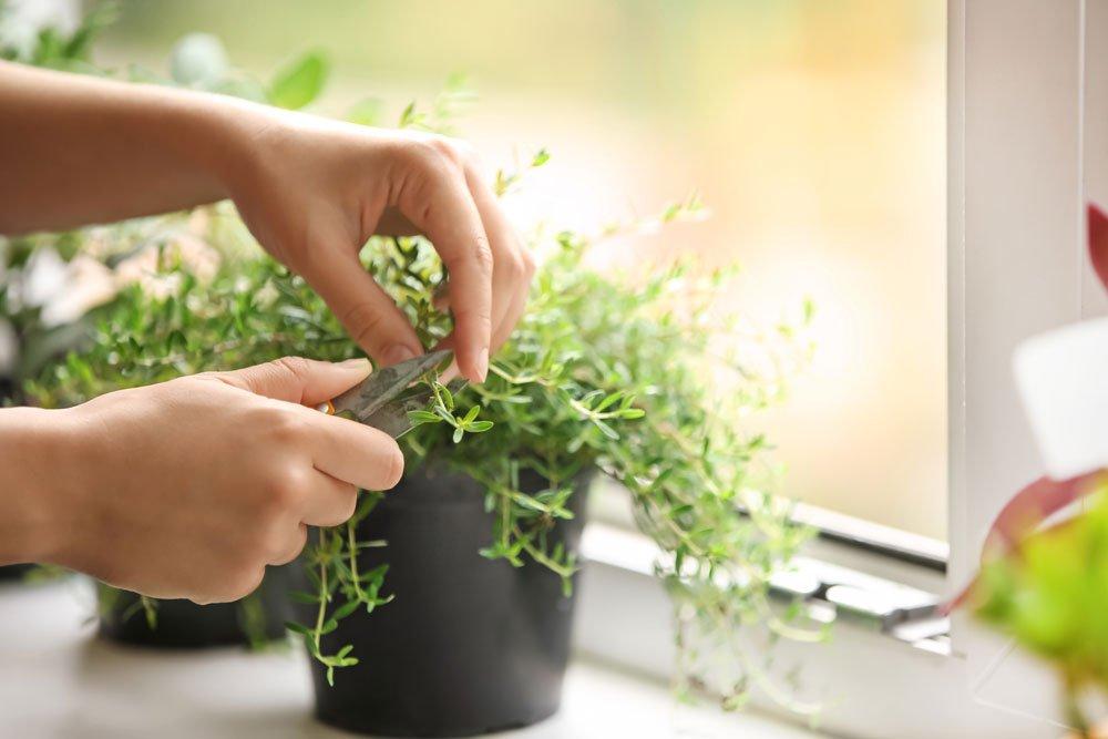 Kräuter Vermehrung verhindern