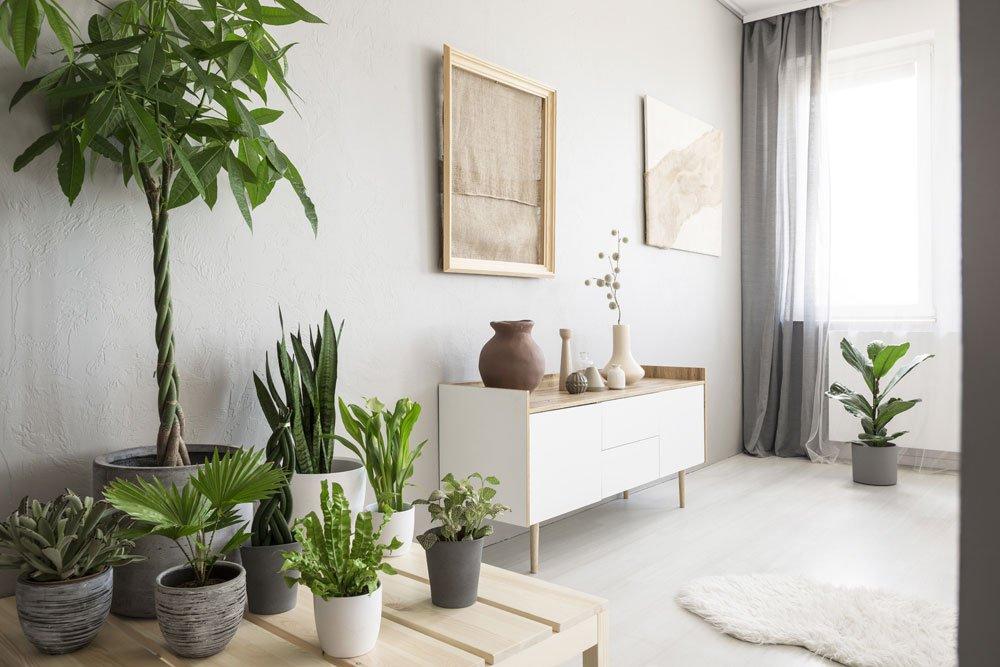 Luftfeuchtigkeit erhöhen - Zimmerpflanzen