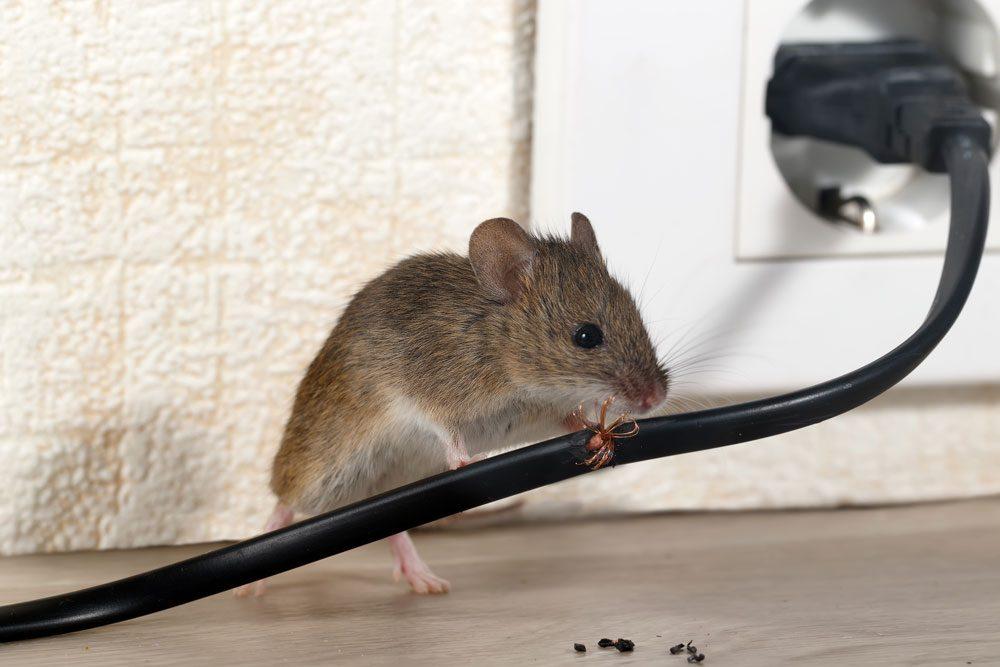 Mäuse Kabel