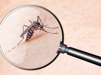 Mücken bekämpfen