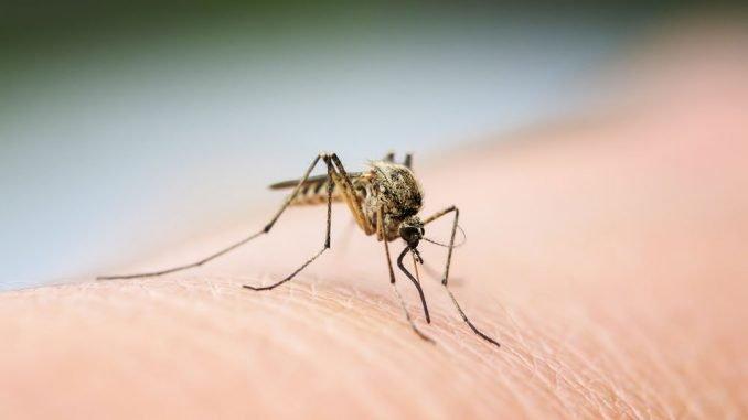 Mücken fern halten