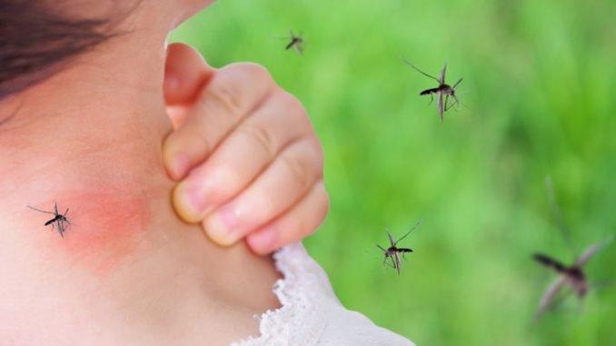 Mückenstich behandeln