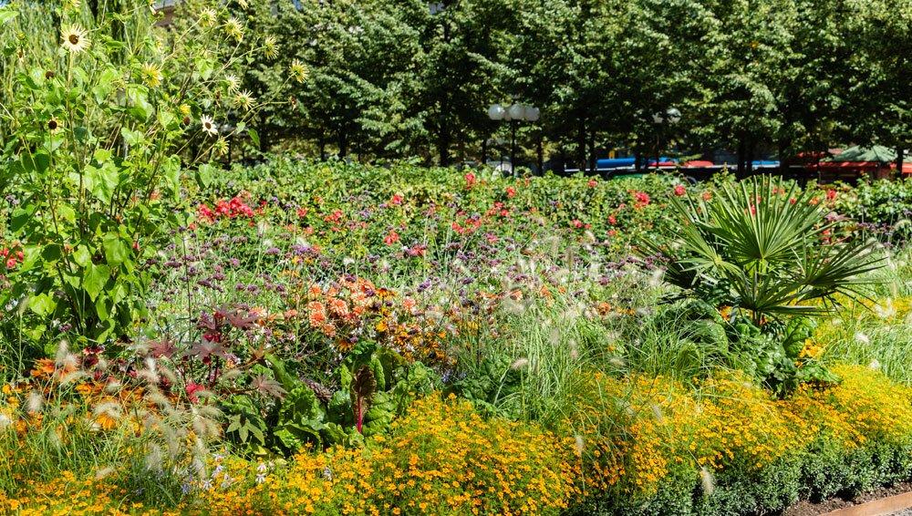 naturbelassenes Blumenbeet