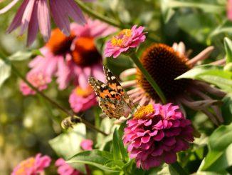 nützliche Insekten anlocken