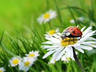 Nützliche Tiere Garten