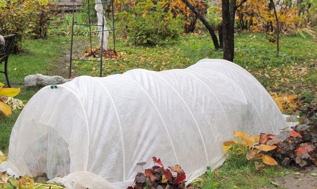 schutz der pflanzen vor frost. Black Bedroom Furniture Sets. Home Design Ideas