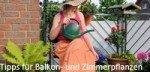 Tipps für Balkon- und Zimmerpflanzen