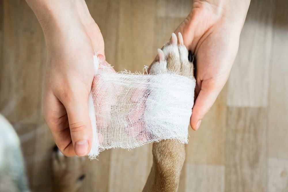 Pfotenpflege beim Hund: Fremdkörper entfernen