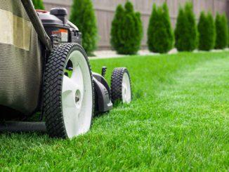Schöner Rasen benötigt viel Pflege
