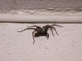 Spinnen bekämpfen