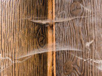 Spinnweben entfernen