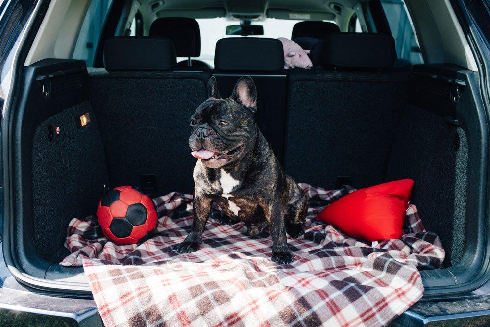 Tierarztbesuch ohne Stress - Anreise