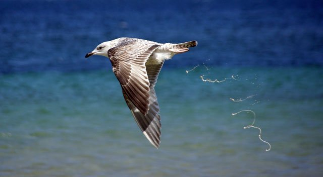 Vogeldreck entfernen